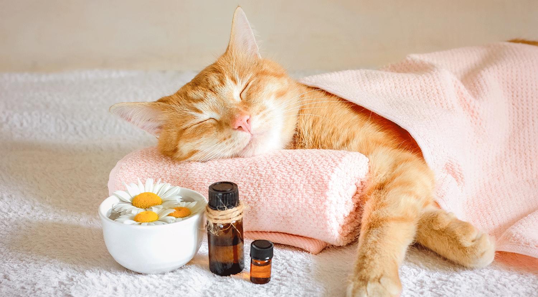 Katze auf einem Handtuch davor ein zwei Fläschchen Ätherisches Öl